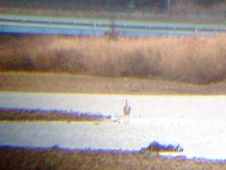 061211 アオサギ冬羽