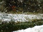061230 雪降り積む1