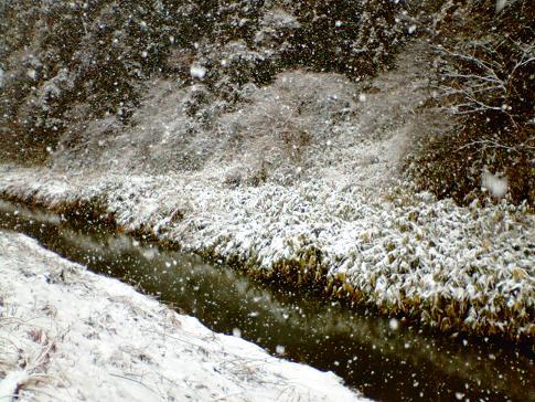 061230 雪降り積む2