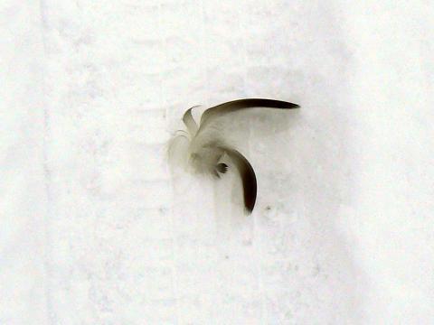 070113 落ちてた羽