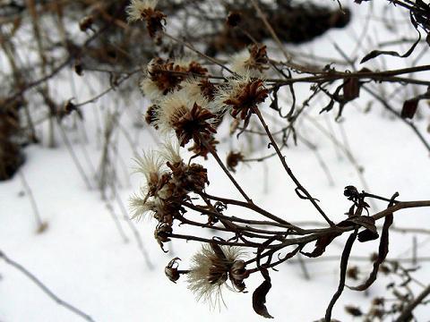 070120 冬の花1