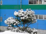 070309 冬景色1松の雪