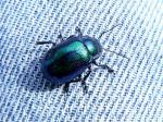 070521 青い甲虫3