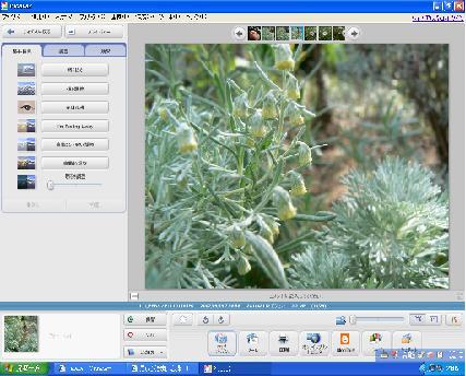 Picasa2 画像編集画面