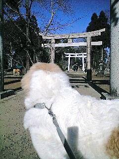 2008年01月06日_PA0_0006