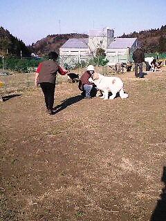 2008年01月06日_PA0_0002