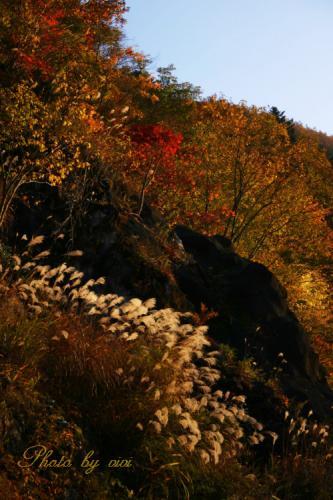 黄金色に輝く丘