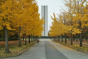 大仙公園正面イチョウ並木の黄葉