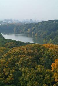 色づく仁徳陵の樹木と内濠のカモの群れ