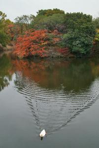 アヒルと樋の谷古墳の櫨紅葉