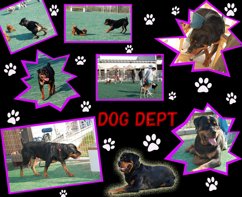 DOG DEPT2