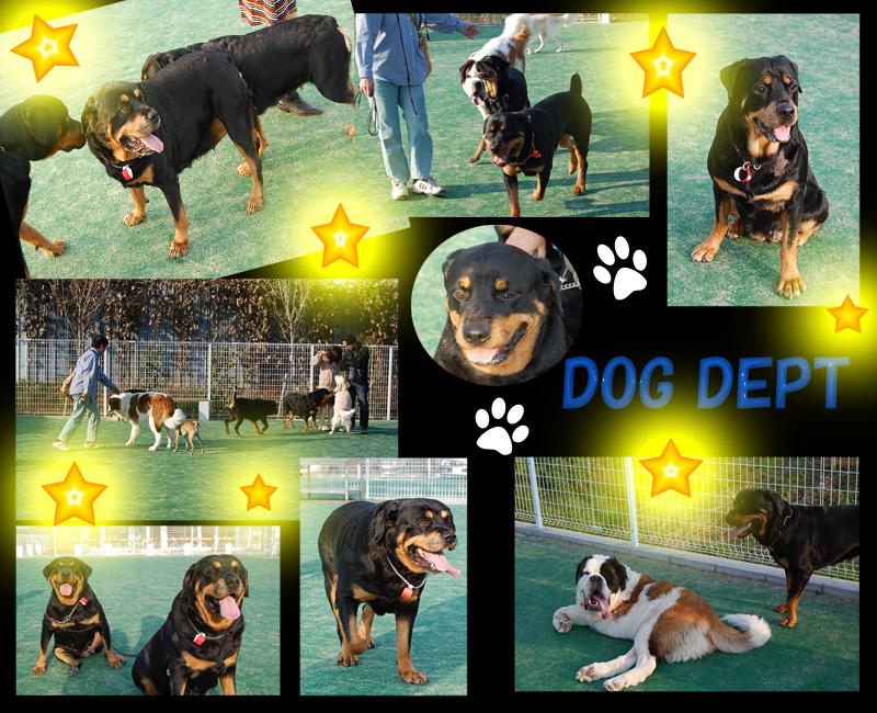 DOG DEPT