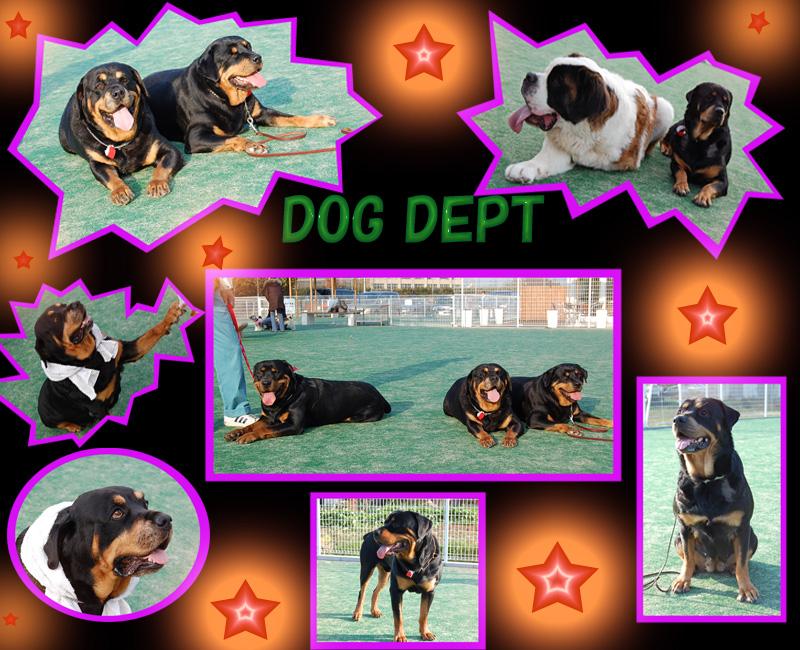 DOG DEPT3