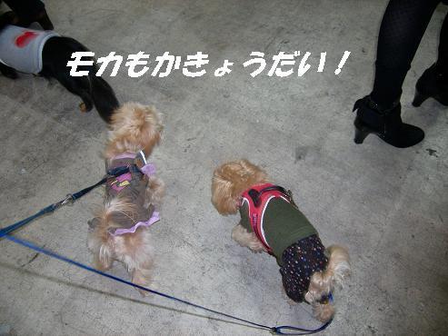 UNI_0095.jpg