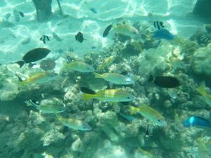 魚たくさん