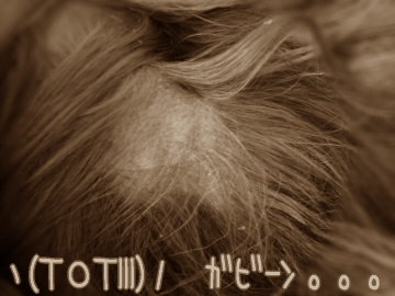 2007omoide3.jpg