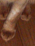 cookiefoot080101.jpg