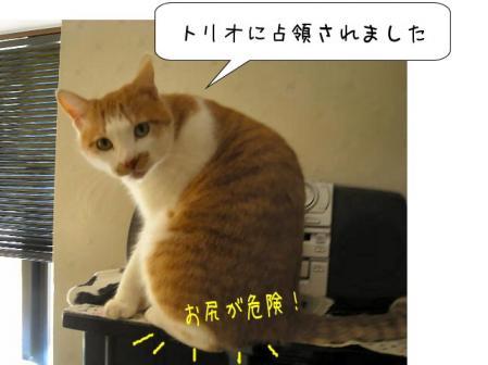 nekoyamaさん どうにかしてよぉ~