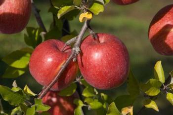 apple200711_002.jpg