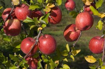apple200711_003.jpg