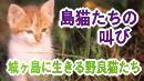 島猫たちの叫び 城ヶ島に生きる野良猫たち