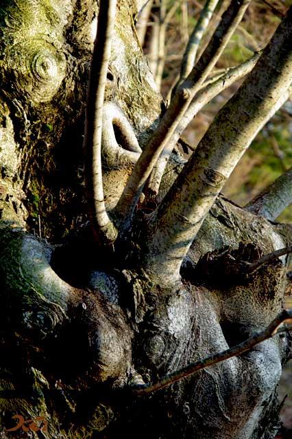 気になる木06